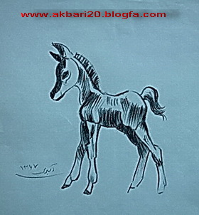 طراحی از اسب  با مداد از حسین اکبری