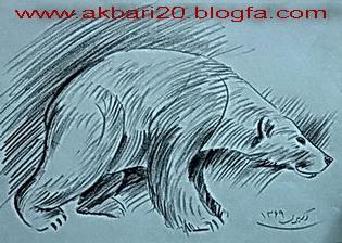 طراحی از خرس قطبی