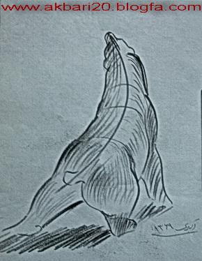 طراحی از خرس قطبی از حسین اکبری