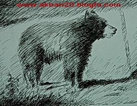 طراحی از خرس با روان نویس از حسین اکبری