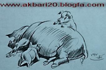 طراحی از خوک از حسین اکبری
